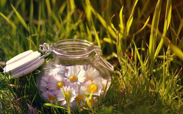 Consejos para prevenir las alergias primaverales