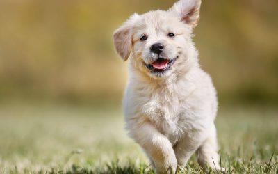 Las 5 mejores razas de perros para tener en casa