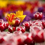 5 plantas de jardín ahora que llega la primavera