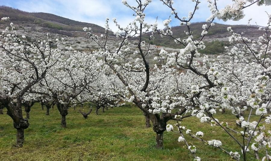 Los mejores destinos para viajar en primavera: Valle del Jerte