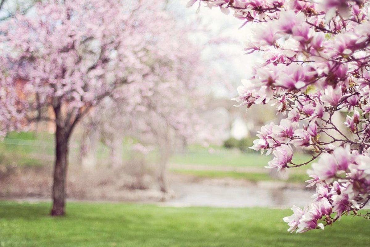 Los mejores destinos para viajar en primavera