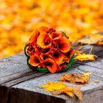 5 flores de otoño que no pueden faltar en tu hogar