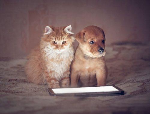 Mascotas que nos han conquistado el corazón a través de Instagram