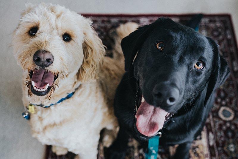 Cuida la salud de tu perro en el hogar